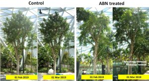 ABN Product_2