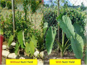 Nurti yield